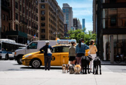 dogwalkers in NYC